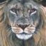 Profilbild von Engelhardt