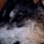 Profilbild von Chistine